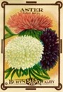 Aster Seed Packet Magnet