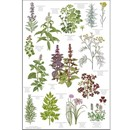 Herbs Organic Tea Towel