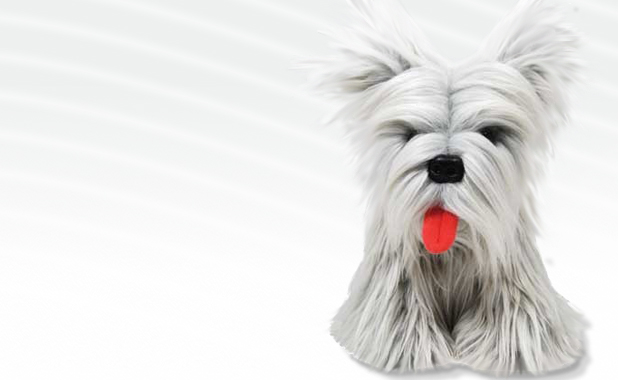 Skye Terrier Plush Toy